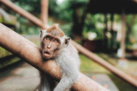 Ubud Monkey Forest Bali {The Complete Guide 2018}