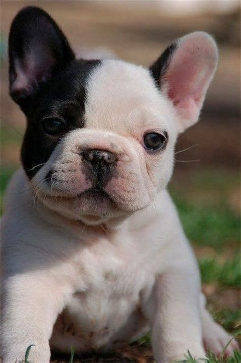 Top 5 Family Friendly Dog Breeds, you will love all of